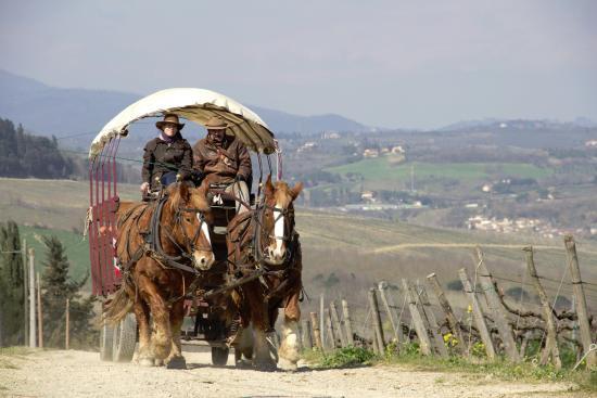Montagnana Val di Pesa, Włochy: i cavalli e la carrozza