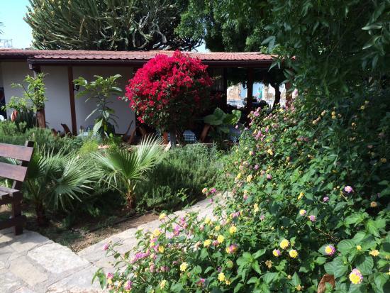 Dionysos Central Hotel : Compact, maar wat een fantastische tuin in het voorjaar!