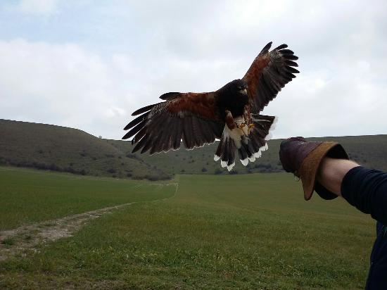 Mere Down Falconry