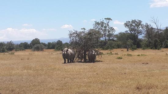 Bilde fra Porini Rhino Camp