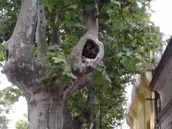 Hotel ROMI: Los Huéspedes en el árbol del frente (Dos Palomas).