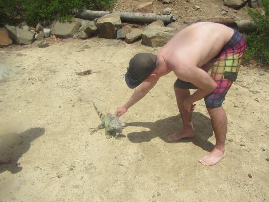 Oyster Pond, St. Maarten: petting the iguanas
