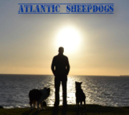Grange, Irlanda: Atlantic Sheepdogs