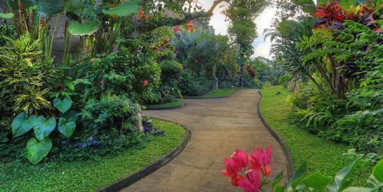Ashoka Tree Resort: Pathway
