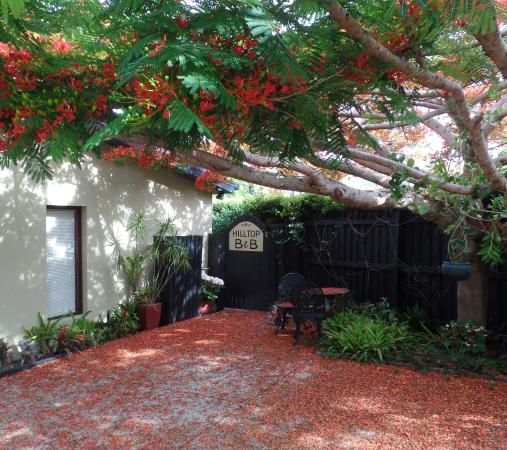 Hilltop Bed And Breakfast Buderim