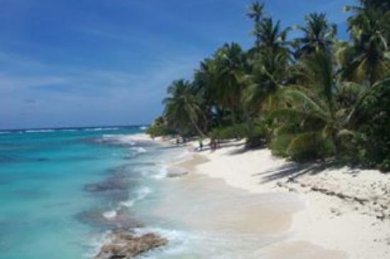 Sol Caribe Sea Flower Hotel : la mejor imagen que saque...