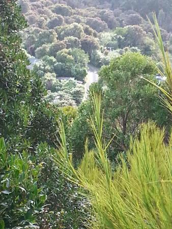 Village & Bays Tours - Stewart Island Experience : Beauty of the bush