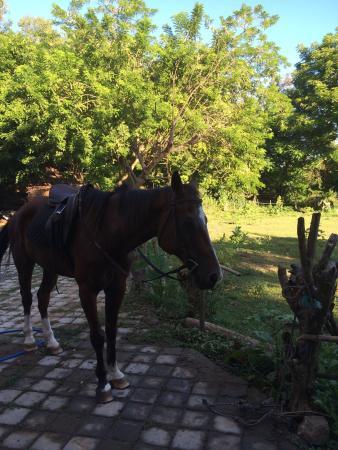 Kuta Horses