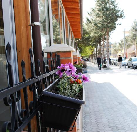 Kukes, Arnavutluk: Flowers