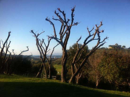La Mortella Country Relais: Giardino