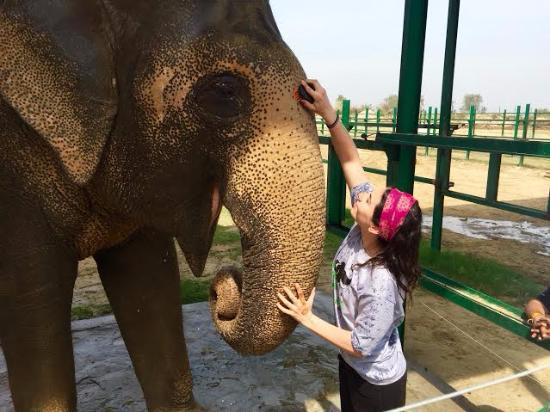 Wildlife SOS: just your average day scrubbing elephants
