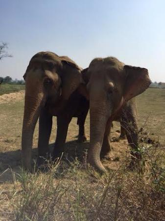 Wildlife SOS: Phoolkali and Maya