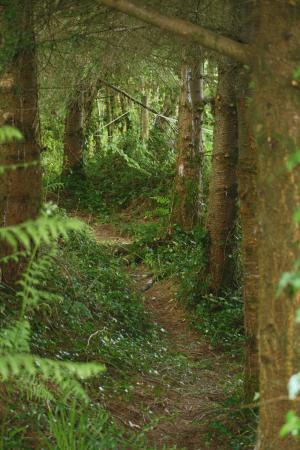 Broadford Ashford Walking Trails