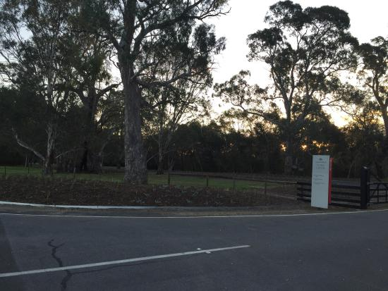 Rowland Flat, Australia: More pics
