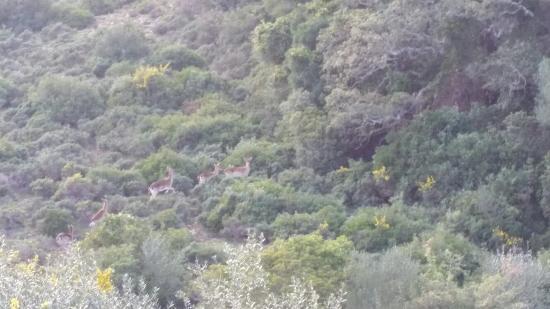 Castellar de la Frontera, สเปน: 20160319_173936_large.jpg