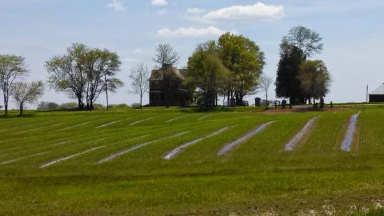 Salem, IA: Elderberry Fields