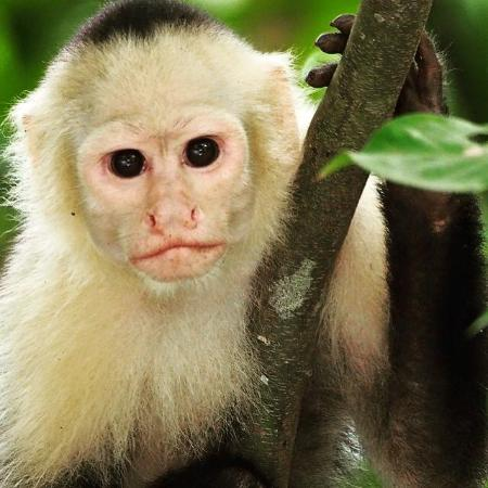 Tranquilo Lodge: Monkeys are commonly seen surrounding our property.