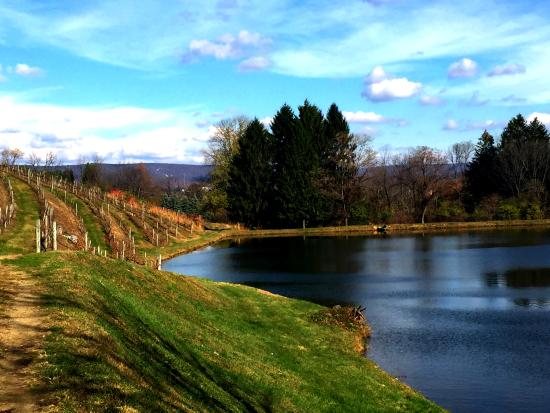 Blue Mountain Vineyards: Vineyard and Pond