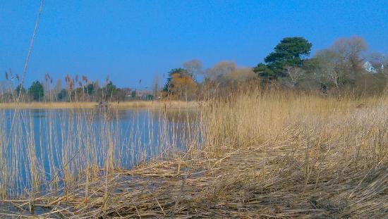 RSPB Weymouth Wetlands at Radipole Lake Nature Reserve