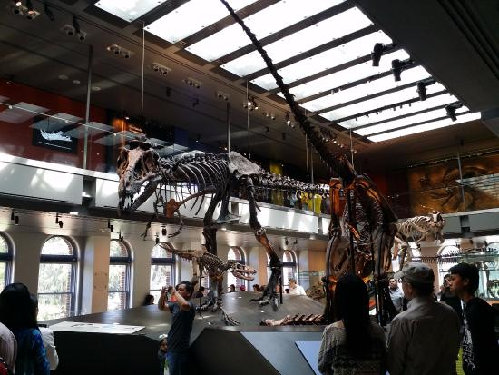 dinosour skeletons picture of natural history museum of los rh tripadvisor com