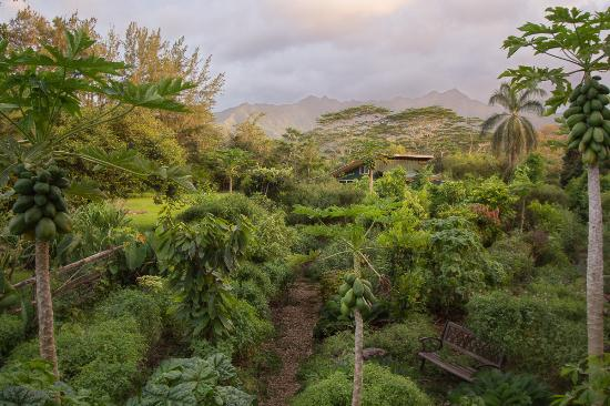 Kilauea, هاواي: Kauai Farmacy Medicinal Herb Garden