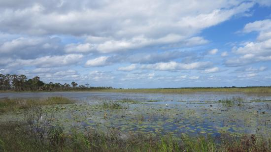 Port Saint Lucie, FL: Wetlands