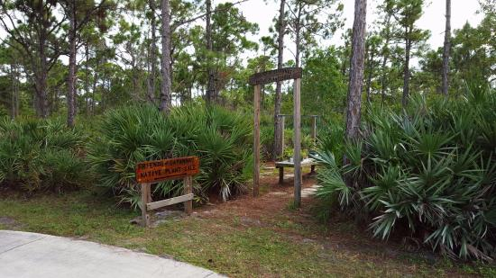 Port Saint Lucie, FL: Wild Flowers for Sale