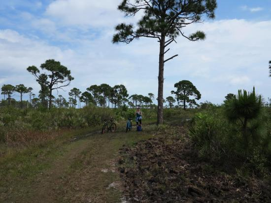 Port Saint Lucie, Φλόριντα: Loop Trail