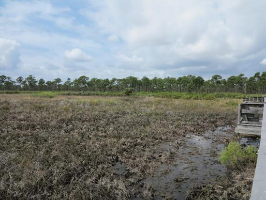 Port Saint Lucie, Φλόριντα: Wetlands