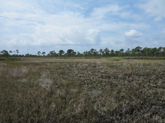 Port Saint Lucie, FL: Wetlands