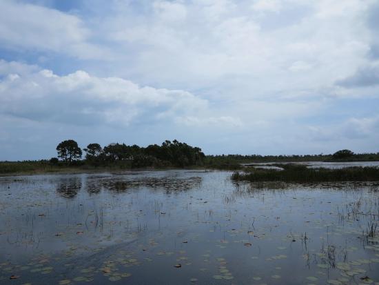 Savannas Preserve State Park: Lilly Pond
