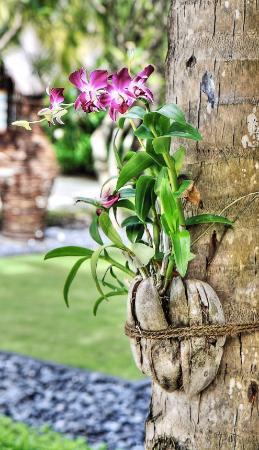Reethirah Island: Detalle: orquídeas por doquier