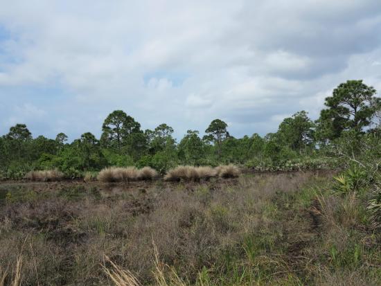 Savannas Preserve State Park: Brush