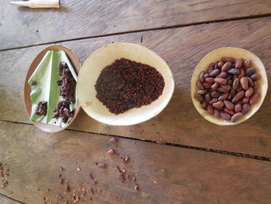 La Loma Jungle Lodge and Chocolate Farm: Chocolate tour.