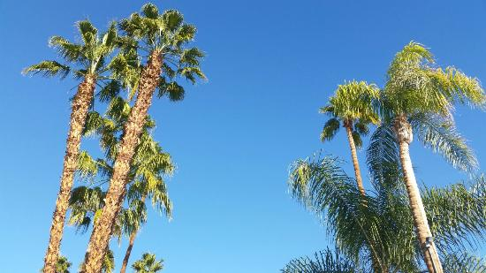 Welk Resort Palm Springs - Desert Oasis: 20151225_130921_large.jpg