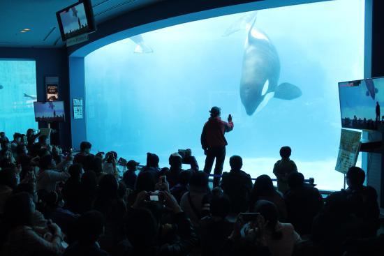 The Orcas Picture Of Port Of Nagoya Public Aquarium