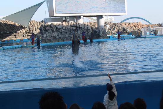 Dolphin Show - Picture of Port of Nagoya Public Aquarium, Nagoya - TripAdvisor
