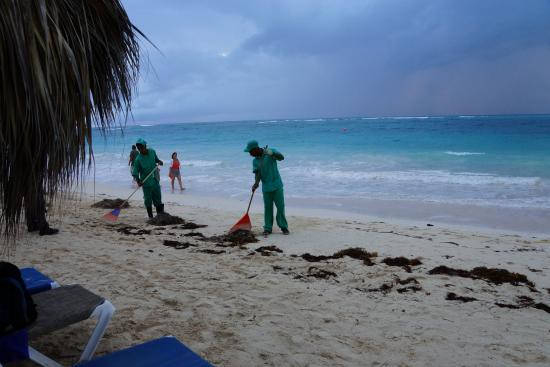 Sea Weed was cleaned diligently every day - Picture of Punta Cana Princess All Suites Resort ...
