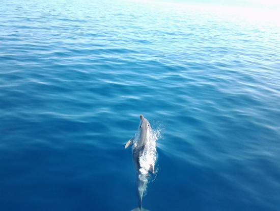 M/S Duboka - Boat Tours: delfini