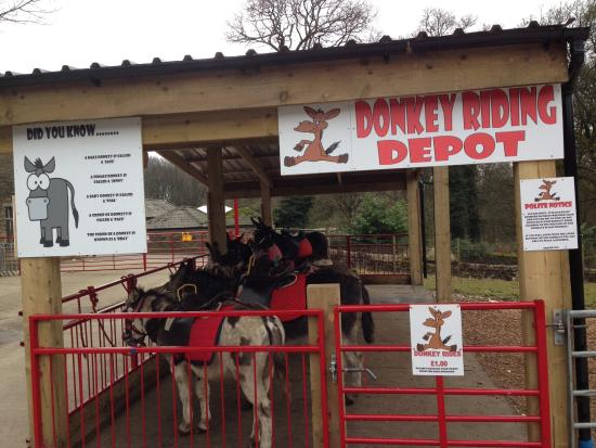 Bolton, UK: An additional treat, a donkey ride... Only for children...