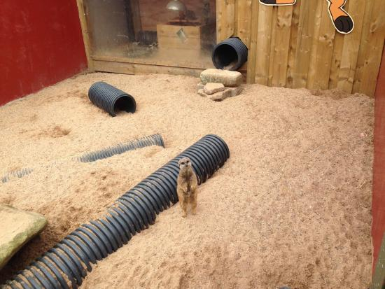 Bolton, UK: Meerkat Enclosure, the walls were too high for small children to see into...