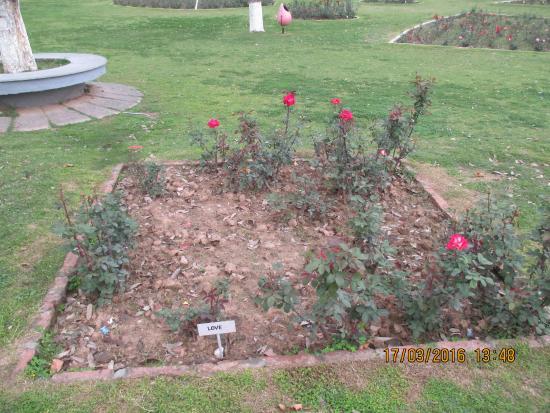 Rose Garden Picture Of Chandigarh Rose Garden Chandigarh