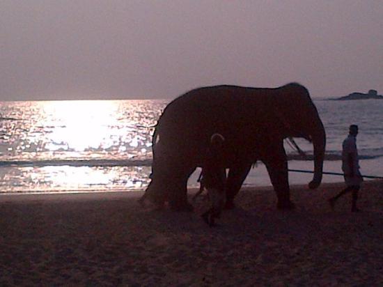 Bentota, Sri Lanka: Прогулка слона по пляжу