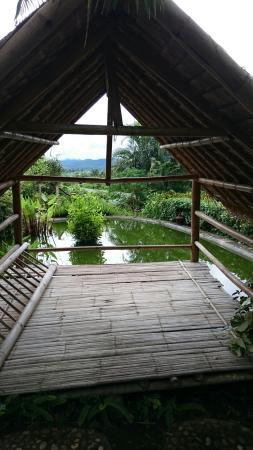 Mae Ai, Thailand: Old trees house