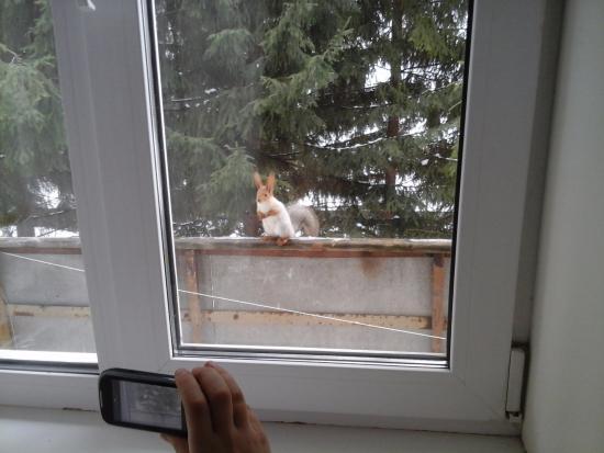 Белка на балконе - picture of kommunalnik, krasnoyarka - tri.