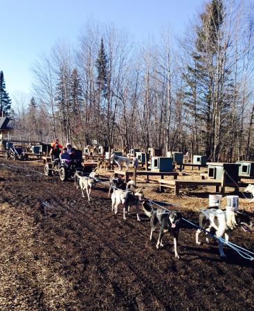 "Jefferson, Nueva Hampshire: Dogs pulling ""all terrain vehicle on wheels :)"""
