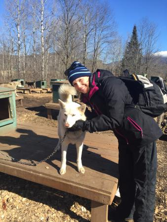 Jefferson, Nueva Hampshire: Dogs are friendly and sweet!