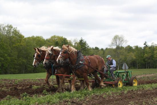 Lee, นิวแฮมป์เชียร์: Farmer John ploughing with the horses
