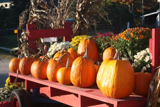 Lee, NH: Our Pumpkins