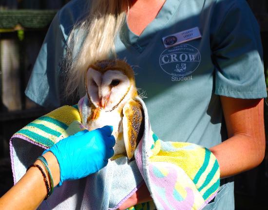 Clinic For The Rehabilitation Of Wildlife (CROW) (Sanibel ...